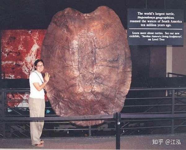 Phát hiện loài rùa cổ đại lớn nhất từng tồn tại trên Trái Đất - Ảnh 2.