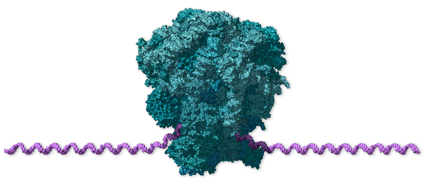 Chi tiết bộ gen SARS-CoV-2: Những tên khủng bố chiếm dụng tế bào phổi người - Ảnh 4.