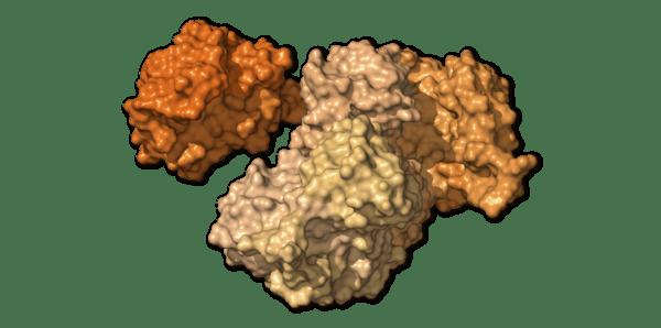 Chi tiết bộ gen SARS-CoV-2: Những tên khủng bố chiếm dụng tế bào phổi người - Ảnh 8.