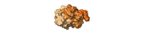 Chi tiết bộ gen SARS-CoV-2: Những tên khủng bố chiếm dụng tế bào phổi người - Ảnh 18.