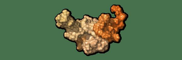 Chi tiết bộ gen SARS-CoV-2: Những tên khủng bố chiếm dụng tế bào phổi người - Ảnh 23.