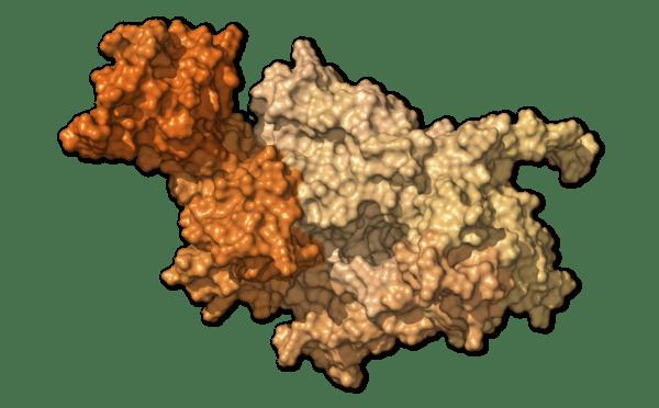 Chi tiết bộ gen SARS-CoV-2: Những tên khủng bố chiếm dụng tế bào phổi người - Ảnh 25.
