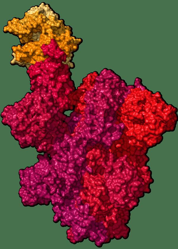 Chi tiết bộ gen SARS-CoV-2: Những tên khủng bố chiếm dụng tế bào phổi người - Ảnh 38.