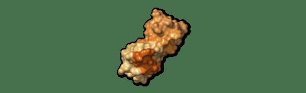 Chi tiết bộ gen SARS-CoV-2: Những tên khủng bố chiếm dụng tế bào phổi người - Ảnh 46.