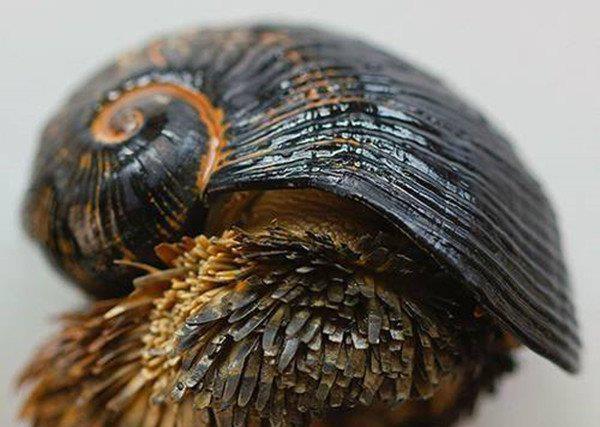 Ốc sên chân vảy: Loài động vật duy nhất trên trái đất có thể biến sắt trở thành lớp áo giáp một cách tự nhiên - Ảnh 5.