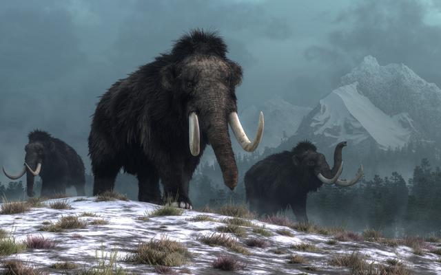 Phát hiện cấu trúc khổng lồ được làm từ xương voi ma mút 25.000 năm trước - Ảnh 2.