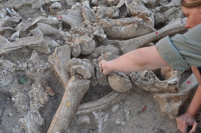 Phát hiện cấu trúc khổng lồ được làm từ xương voi ma mút 25.000 năm trước - Ảnh 6.