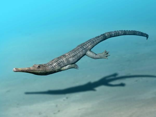 Cá sấu tiền sử dưới đại dương chỉ cần một cú đớp cũng có thể làm thủng bụng ngư long - Ảnh 10.