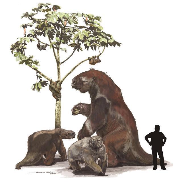 Chuyện thật như đùa, loài động vật tiền sử bị chết vì chính phân của mình - Ảnh 1.