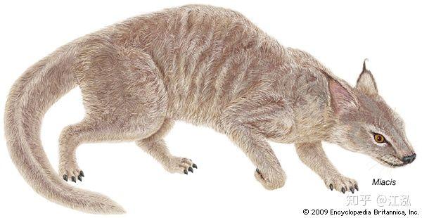 Khám phá khảo cổ mới cho thấy chó và mèo trước đây có chung một tổ tiên - Ảnh 2.