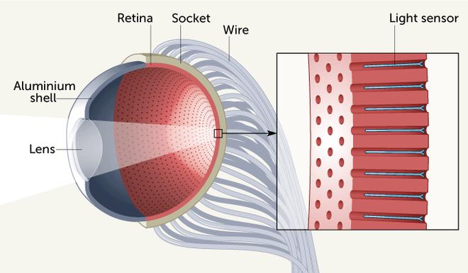 Xuất hiện mắt nhân tạo sở hữu tốc độ phản ứng vượt xa mắt người cùng độ phân giải cực cao - Ảnh 1.