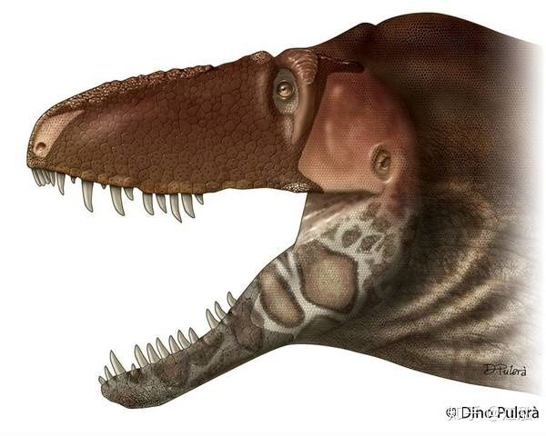 Nghiên cứu mới cho thấy khủng long bạo chúa Tyrannosaurus dựa vào giác quan thứ sáu để yêu? - Ảnh 5.