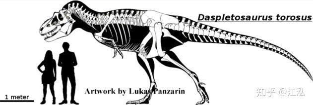Nghiên cứu mới cho thấy khủng long bạo chúa Tyrannosaurus dựa vào giác quan thứ sáu để yêu? - Ảnh 3.