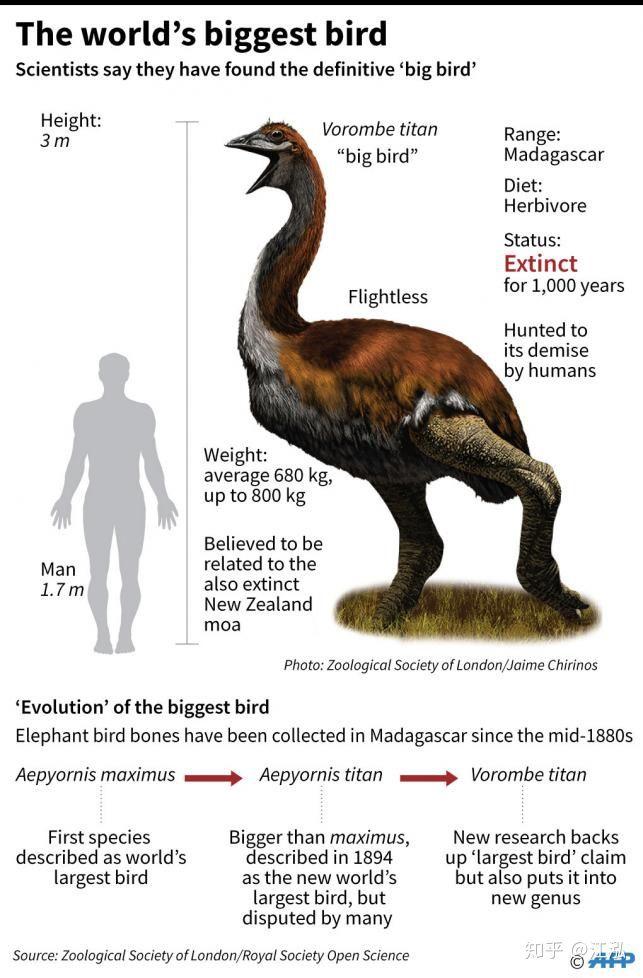 Madagascar phát hiện ra loài chim khổng lồ đầu tiên trong lịch sử có độ cao lên tới 3 mét - Ảnh 6.