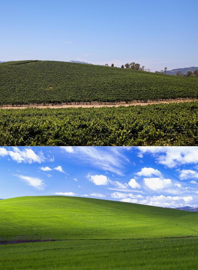 Hình nền huyền thoại trên Windows XP một thời: Được Microsoft trả hơn 100.000 USD vào năm 2000, đến nay vẫn xanh tốt như ngày nào - Ảnh 2.
