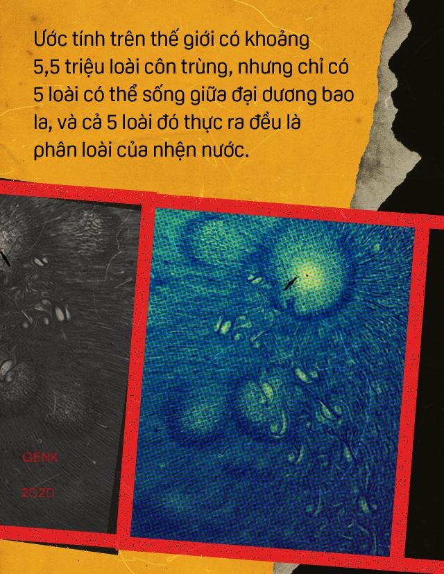 Đọc cuối tuần: Những bí ẩn của loài nhện nước viễn dương - sinh vật đến thần thánh cũng không thể nhấn chìm - Ảnh 5.