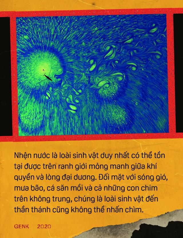 Đọc cuối tuần: Những bí ẩn của loài nhện nước viễn dương - sinh vật đến thần thánh cũng không thể nhấn chìm - Ảnh 9.