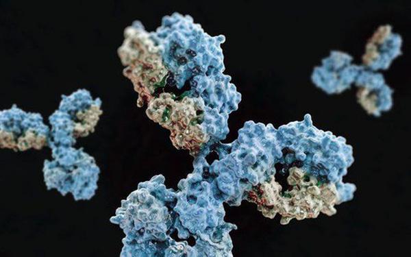 Phát hiện kháng thể có khả năng vô hiệu hóa virus SARS-CoV-2 - Ảnh 1.