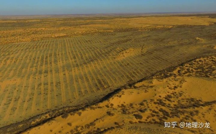 Trồng cây trên sa mạc là tốt hay xấu? - Ảnh 3.