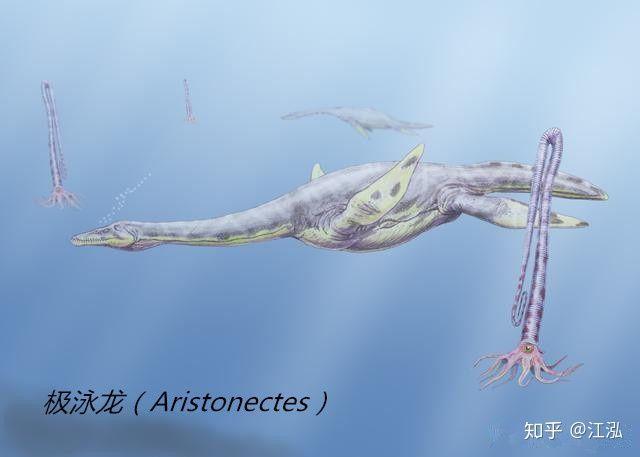 Các nghiên cứu phát hiện ra rằng những con thằn lằn cổ rắn thời tiền sử có khả năng lặn tương tự với cá nhà táng hiện đại - Ảnh 9.