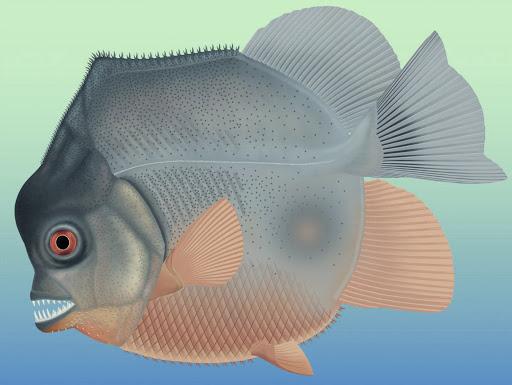 Những ví dụ cho thấy tiến hóa đôi khi cũng hà tiện, tận dụng cùng một đặc điểm cho hai loài khác nhau - Ảnh 9.