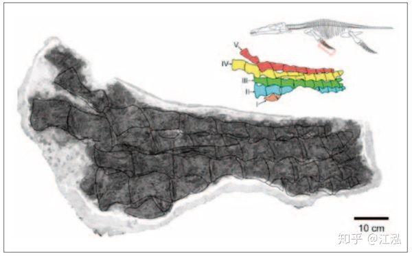 Predator X: Quái vật biển cả đáng sợ nhất kỷ Jura - Ảnh 6.