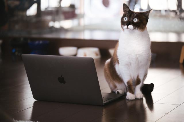 Nhật Bản: Họp từ xa xong sếp vẫn bắt online chỉ để ngắm mèo nhà nhân viên - Ảnh 1.