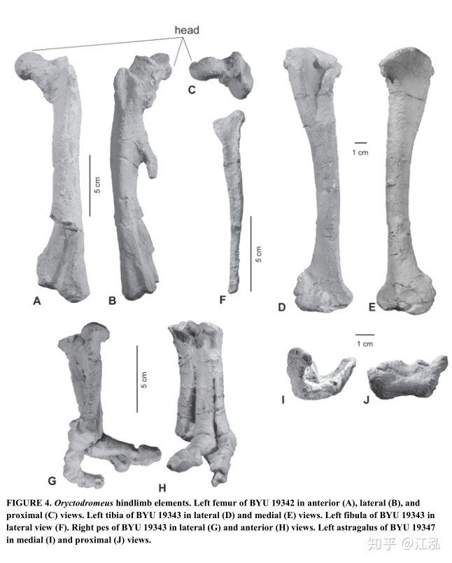 Phát hiện loài khủng long sống dưới lòng đất 100 triệu năm trước - Ảnh 9.