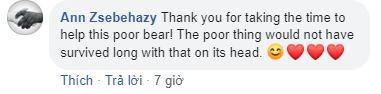 Ngạt thở với đoạn video giải cứu chú gấu vùng vẫy giữa hồ vì bị mắc kẹt đầu trong lọ nhựa - Ảnh 5.
