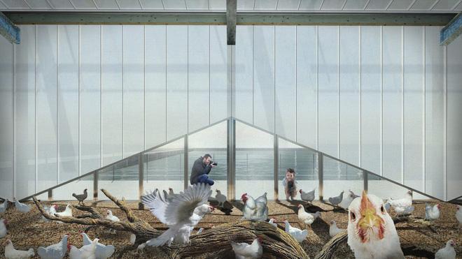 Ngỡ ngàng trước trang trại gà nổi trên mặt nước ở Hà Lan - Ảnh 7.