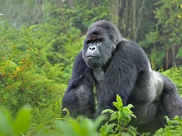 Để giữ lại vẻ đẹp, nhiều loài động vật dường như đang đi vào ngõ cụt của sự tiến hóa? - Ảnh 8.