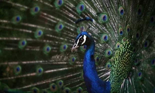 Để giữ lại vẻ đẹp, nhiều loài động vật dường như đang đi vào ngõ cụt của sự tiến hóa? - Ảnh 2.