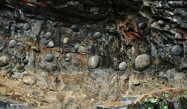 Vách đá kỳ quái cứ 30 năm lại đẻ trứng một lần, các nhà khoa học đau đầu đi tìm lời giải đáp - Ảnh 3.