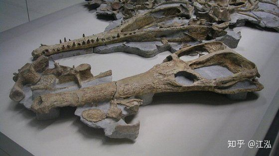 Machimosaurus rex: Loài cá sấu nước mặn to lớn nhất từng được con người phát hiện - Ảnh 6.