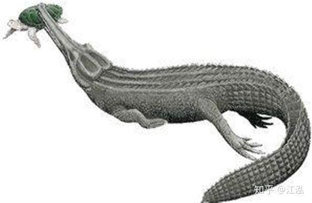 Machimosaurus rex: Loài cá sấu nước mặn to lớn nhất từng được con người phát hiện - Ảnh 8.