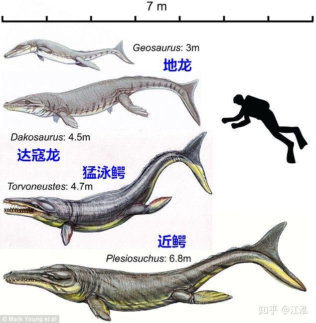 Machimosaurus rex: Loài cá sấu nước mặn to lớn nhất từng được con người phát hiện - Ảnh 5.