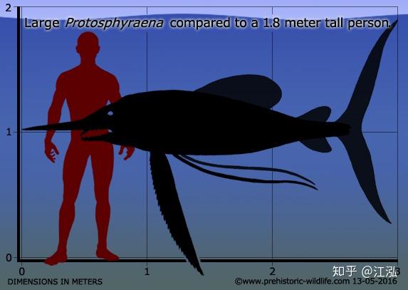 Phát hiện loài cá kiếm cổ đại với hàm răng sắc nhọn ngoại cỡ - Ảnh 8.