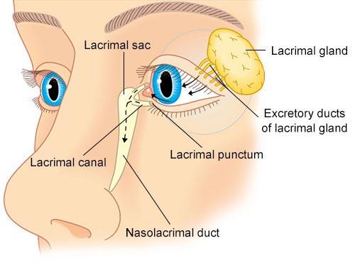 Giải mã bí ẩn của haemolacria: Chứng bệnh khiến những cô gái Ấn Độ khóc ra máu - Ảnh 7.