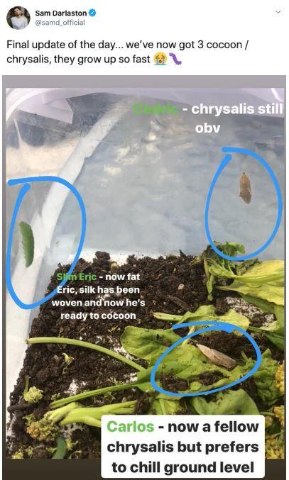 Phát hiện 7 con sâu trong những gói rau mới mua, anh thanh niên quyết định nuôi dưỡng chúng khôn lớn thành bướm rồi thả đi - Ảnh 14.