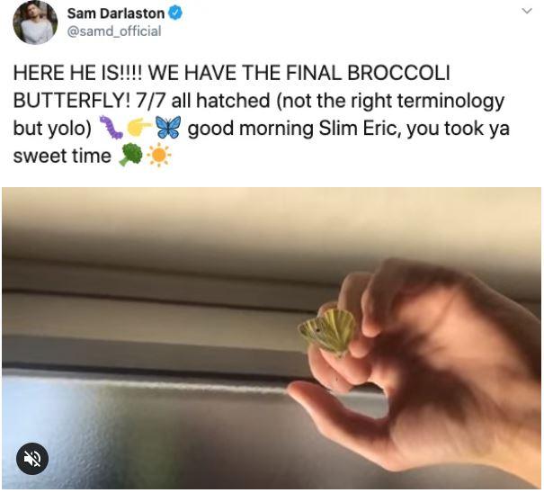 Phát hiện 7 con sâu trong những gói rau mới mua, anh thanh niên quyết định nuôi dưỡng chúng khôn lớn thành bướm rồi thả đi - Ảnh 21.