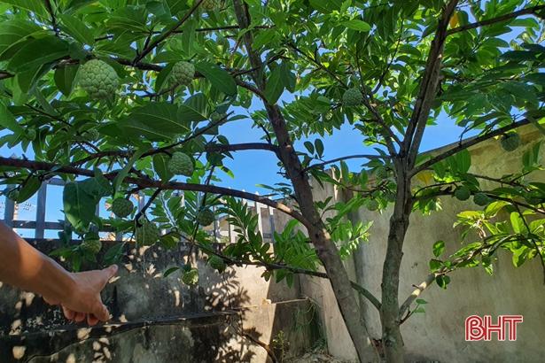 Nông dân Hà Tĩnh tưới cây... bằng smartphone! - Ảnh 4.