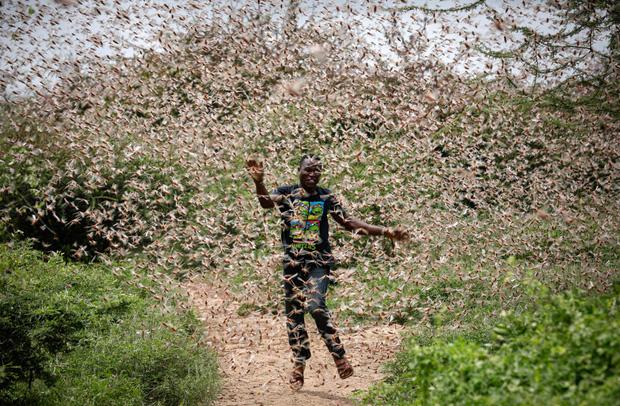 Chùm ảnh rợn người về đại dịch châu chấu đang hoành hành ở châu Phi: Binh đoàn nghìn tỷ con châu chấu với sức ăn bằng 35.000 người/ngày bay kín trời - Ảnh 1.