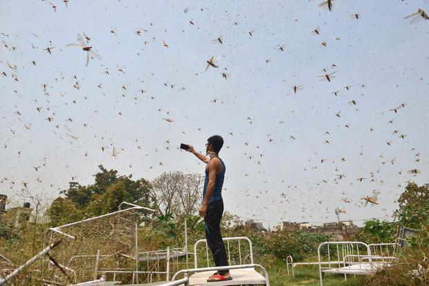 Chùm ảnh rợn người về đại dịch châu chấu đang hoành hành ở châu Phi: Binh đoàn nghìn tỷ con châu chấu với sức ăn bằng 35.000 người/ngày bay kín trời - Ảnh 19.