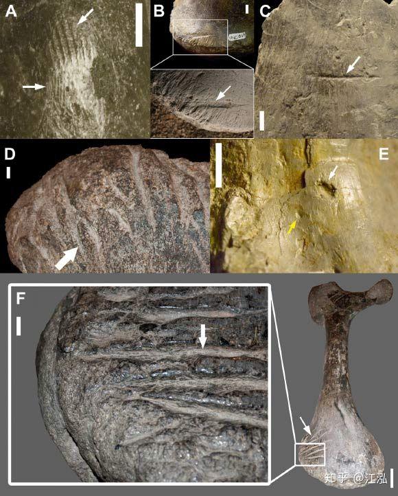 Những mẫu hóa thạch mới tiết lộ loài khủng long Allosaurus không chỉ khát máu mà chúng còn ăn thịt cả đồng loại - Ảnh 4.