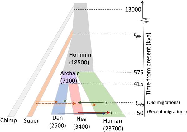 Các nhà khoa học phát hiện ra một tổ tiên bí ẩn của loài người, mang những gen chưa từng được xác định - Ảnh 2.