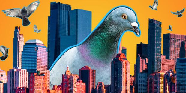 Đông đến mức không thể chịu nổi: Chim bồ câu đã xâm chiếm toàn bộ các thành phố của Mỹ như thế nào? - Ảnh 2.