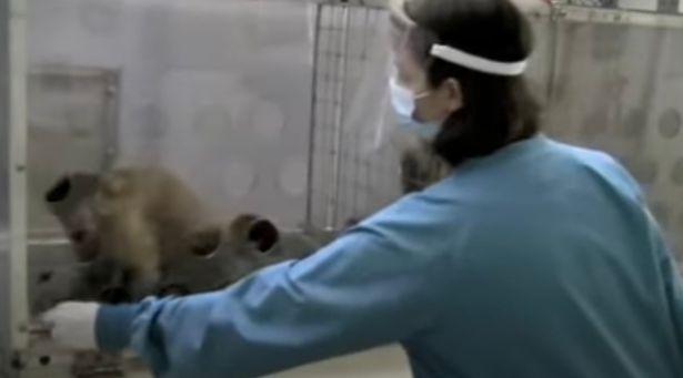 Nghiên cứu mới cho thấy loài khỉ cũng có cảm giác bất công giống như con người - Ảnh 2.