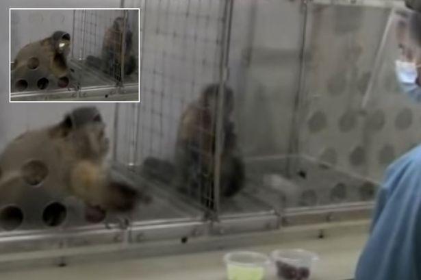 Nghiên cứu mới cho thấy loài khỉ cũng có cảm giác bất công giống như con người - Ảnh 3.