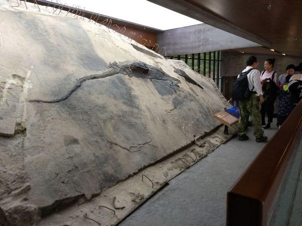 Loài bò sát biển cổ đại có thể nuốt chửng con mồi dài tới 4 mét - Ảnh 3.