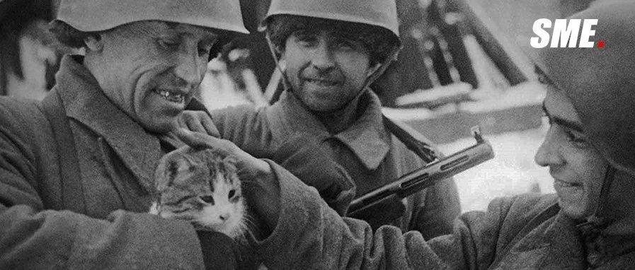 Chiến dịch thả mèo, những người lính dù đáng yêu nhất trong lịch sử được Không quân Hoàng gia Anh đích thân vận chuyển để đối phó với bệnh dịch - Ảnh 11.